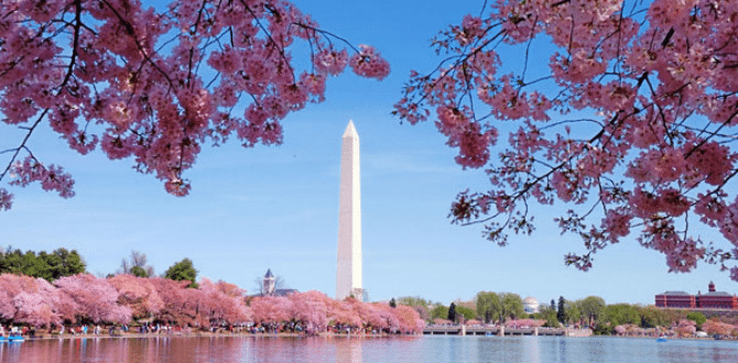 25 Free Things To Do In Washington DC This Summer
