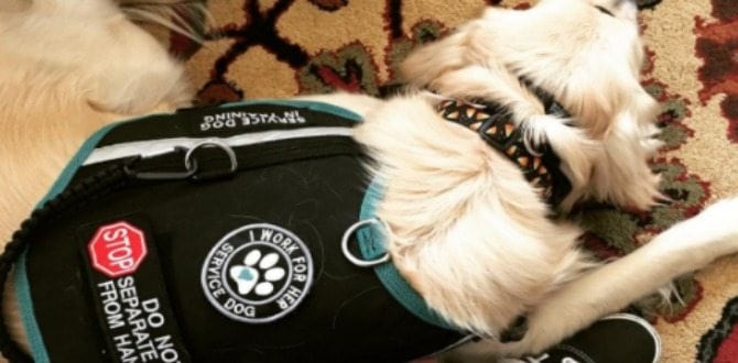 A Day In The Life Of A Service Dog Handler