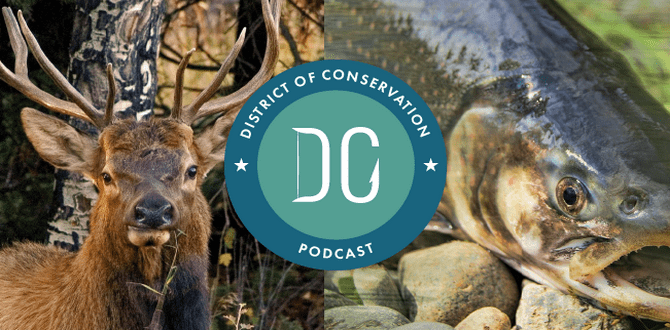 PODCAST REVIEW: Meet The Podcast Bringing Conservation Efforts To The Swamp