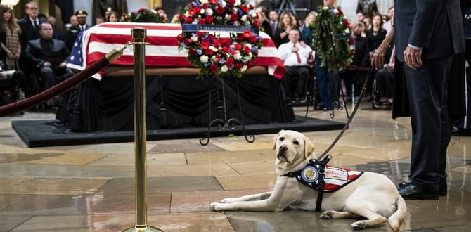 What's Next For George HW Bush's Adorable Service Dog, Sully HW Bush?