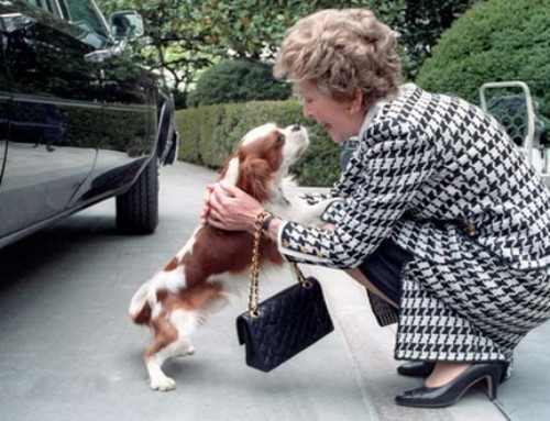 QUIZ: Which Former White House Pet Are You?