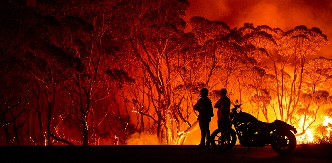 9 Ways To Help Victims Of The Australian Wildfires